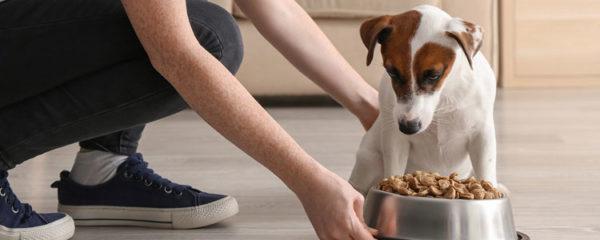 Nourrir chien